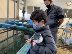 ちびっ子ライターが見つけた小さな海の生き物たち